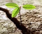 La resilienza: una qualità del D-Mondo e non solo